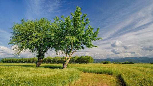 Timberland承诺在未来五年内种植5000万棵树