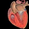 创新科技资讯:使用AI技术可以更准确地诊断心脏状况